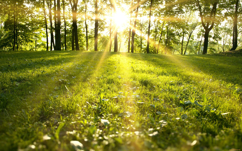 разделе солнечный день фото картинки ваши приложения находятся